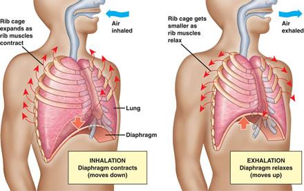 медитация на дыхании